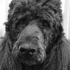 Junior, the Office Dog